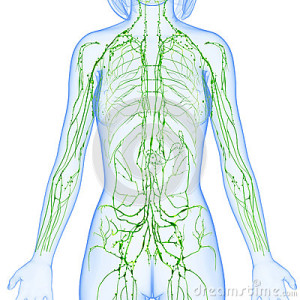 female-lymphatic-system-x-ray-anatomy-illustration-isolated-36217253