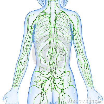 Total Health Resonance Why A Healthy Lymphatic System is Critical to ...